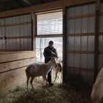 Volunteer at Last Dance Rescue Ranch