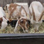 Feeding Time Last Dance Rescue Ranch