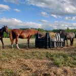 Horses at Last Dance Rescue Ranch