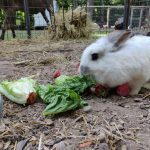 Rabbits at Last Dance Rescue Ranch
